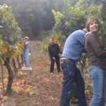 Chouinard Friends Picking Chardonnay