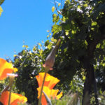 Chouinard winery flowers